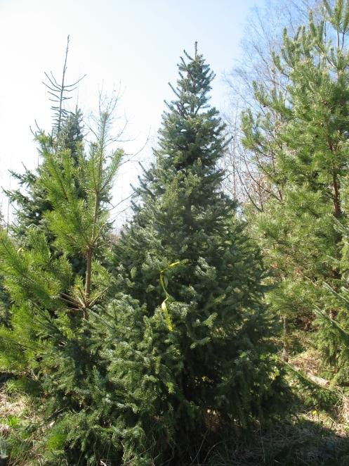 Särkisalon metsäpalsta 2013.