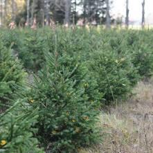 Someron Korven palstan puita vuonna 2018