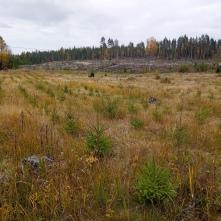 Ruoveden viljelmä syksyllä 2021